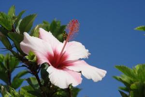 Überwintern auf Madeira