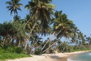 Überwintern in Sri Lanka