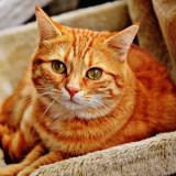 cat-1046544_1280