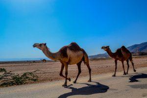 Überwintern im Oman