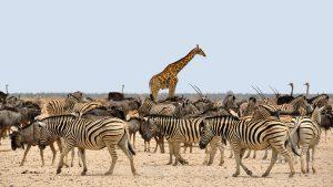 Überwintern in Namibia