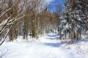 Skiurlaub im Thüringer Wald