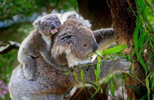 Überwintern in Australien